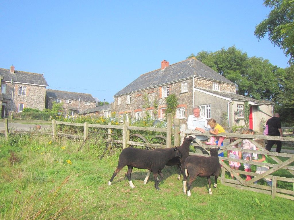Trelay-buildings-and-black-sheep