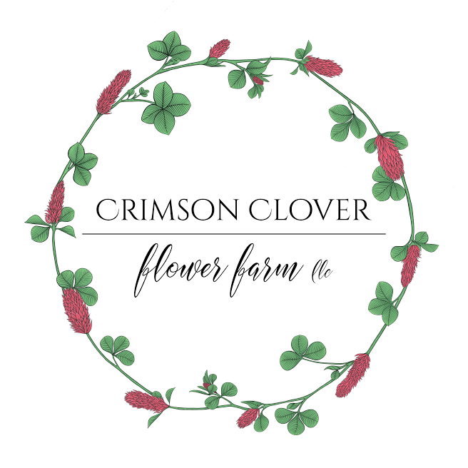 Crimson_Clover_Final_Color_Medium